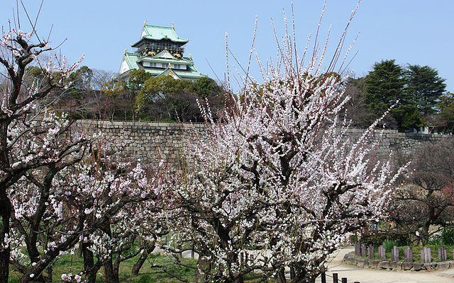 Plum_Grove_in_Osaka_Castle_Park_in_201503_006.jpg